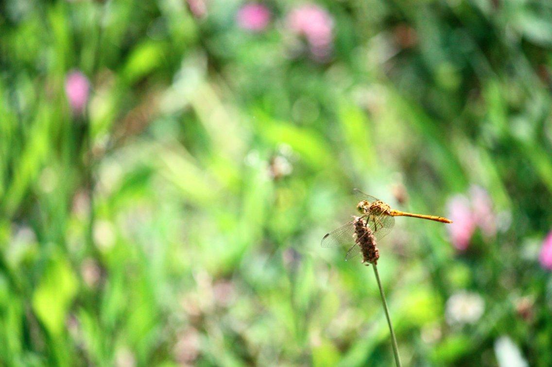 dandara-silva-003-primavera-in-fiore-osellino
