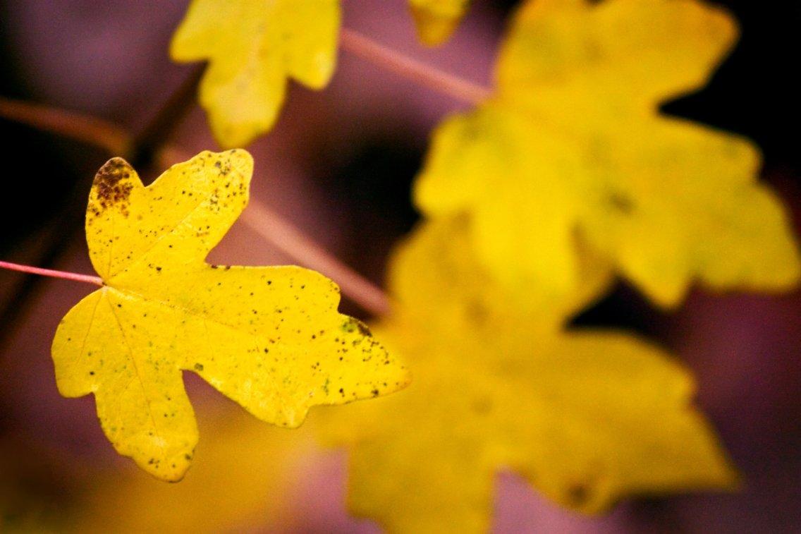 dandara-silva-004-giallo-autunno-osellino