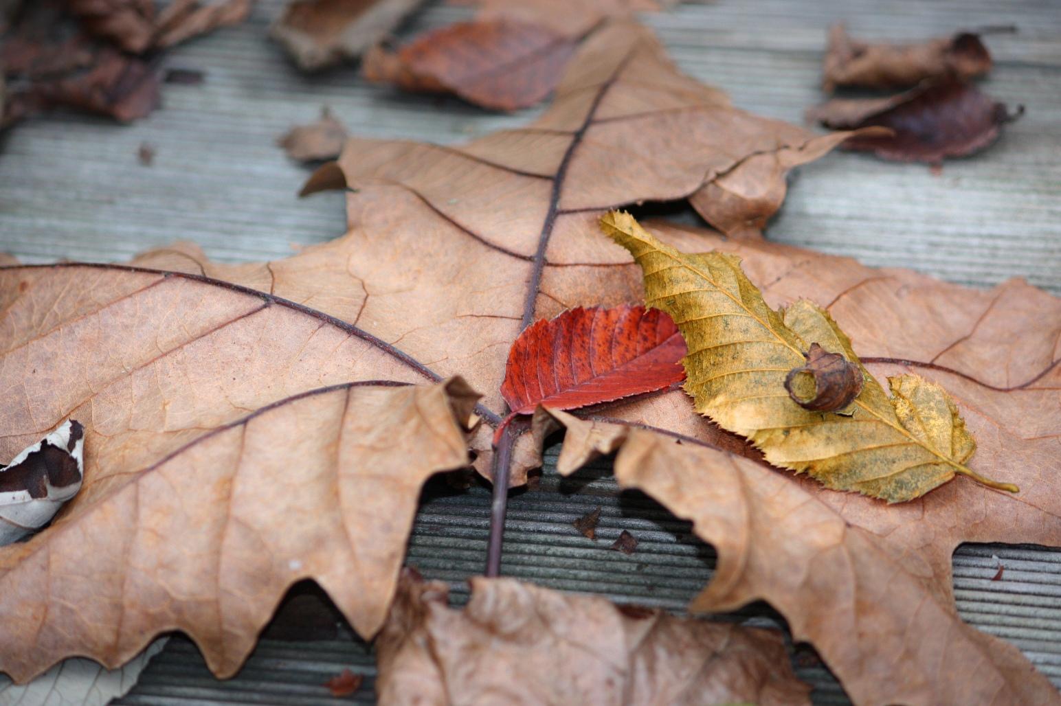 dandara-silva-008-foglie-cadute-osellino