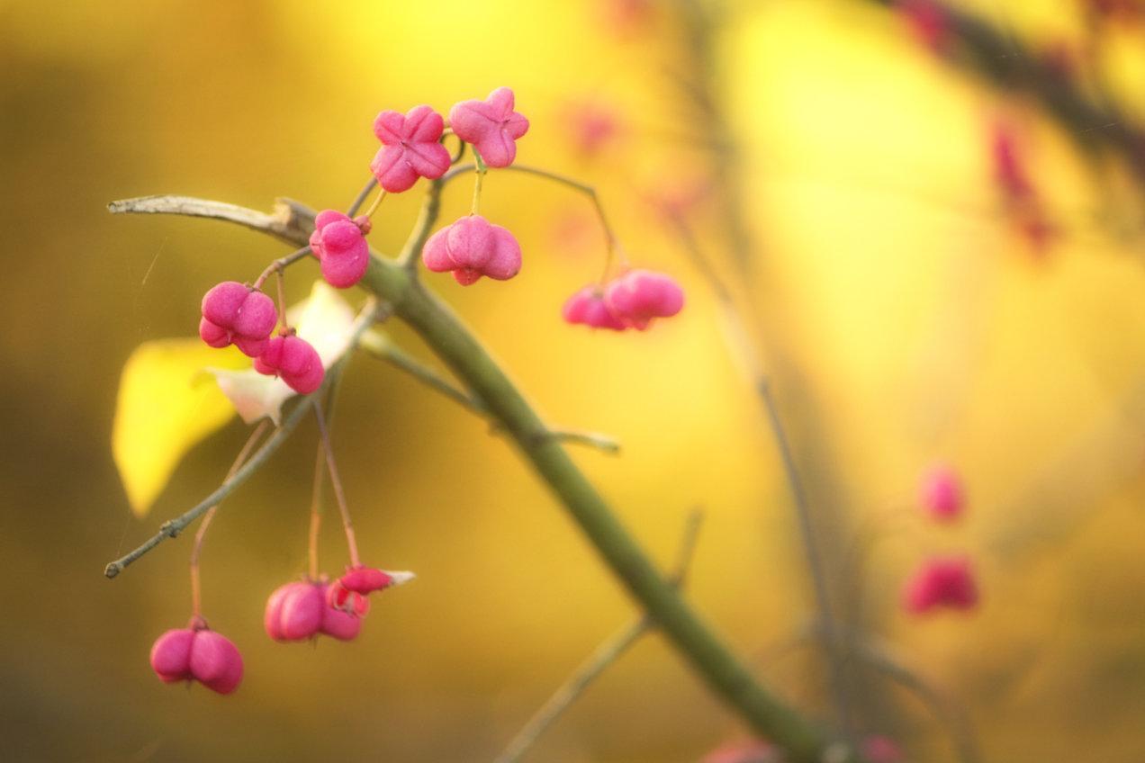 mirco-boccolini-03-colori-dun-vivace-autunno-zaher