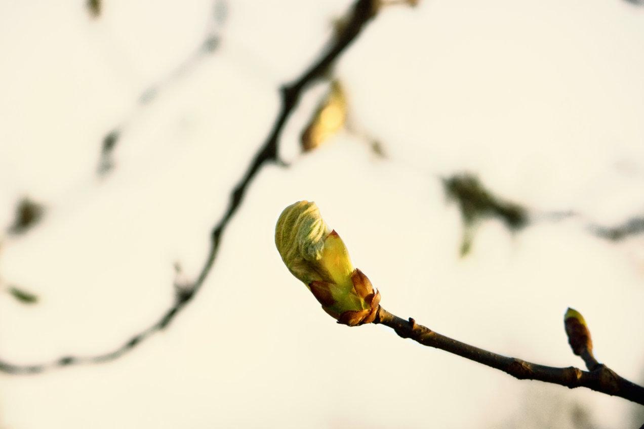 mirco-boccolini-06-arriva-la-primavera-osellino